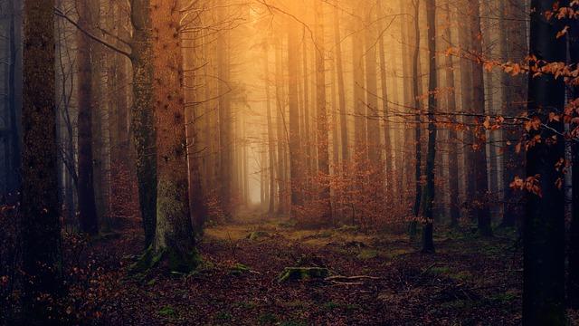 wood-3119826_640